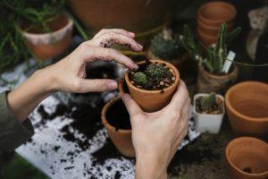 bien entretenir vos plantes