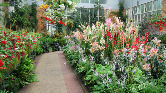Aménager un jardin : comment s'y prendre ?