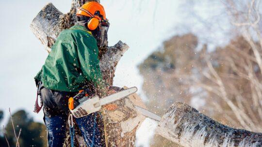 Les règles à respecter pour abattre l'arbre du jardin