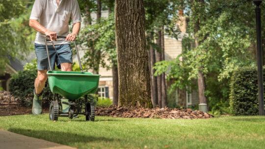 Guide pour la création d'une pelouse