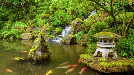 Comment réussir un jardin d'eau ?