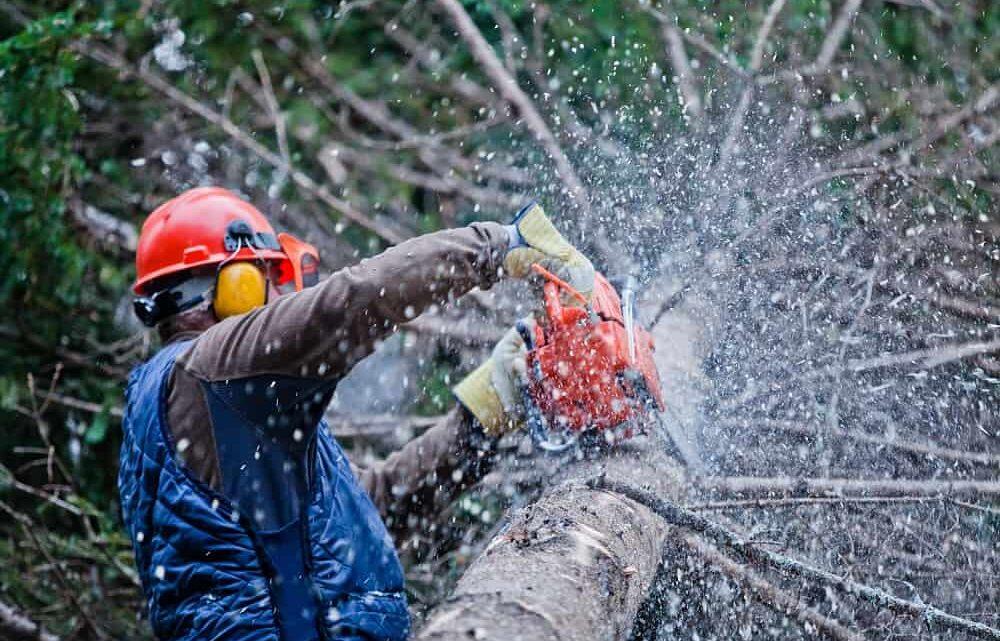 Les précautions à prendre pour abattre un arbre en toute sécurité