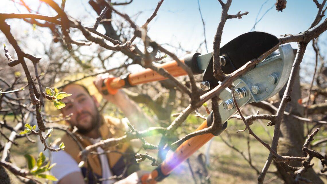 Quelles sont les techniques pour élaguer un arbre?