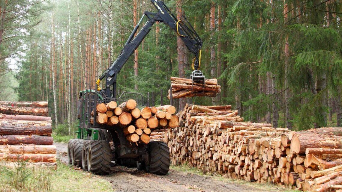 Quelles sont les étapes d'une exploitation forestière?